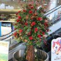 札幌ショールームにお花