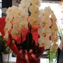 胡蝶蘭は新鮮なモノを市場から